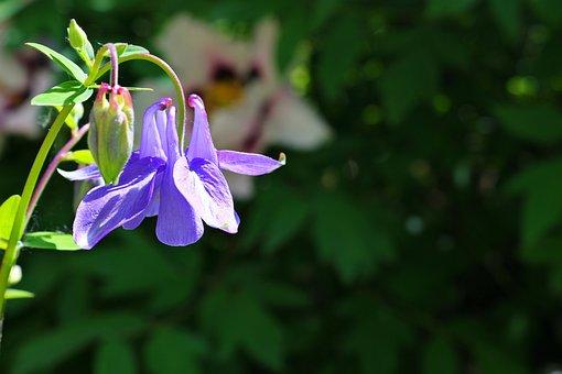 Flowers, Bells, Grass, Summer, Green