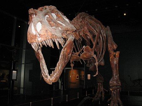 T-rex, Dinosaur, Tyrannosaurus, Reptile, Jurassic