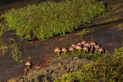 Mushroom, Mushroom Group, Sponge, Forest Mushroom