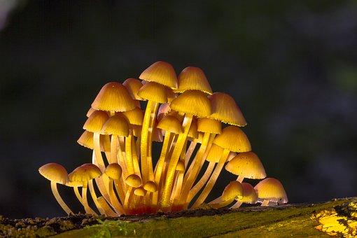 Mushroom, Mushroom Group, Sponge, Mini Mushroom
