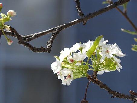 Spring, Nature, Flower, Green, Summer, Season, Natural