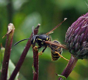 Wasp, Insect, Nature, Summer
