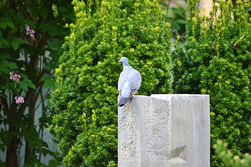 Dove, Bird, Feather, Animal, Plumage, Wing, City Pigeon