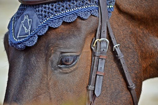 Horse, Competition, Horse Riding, Equestrian, Rider