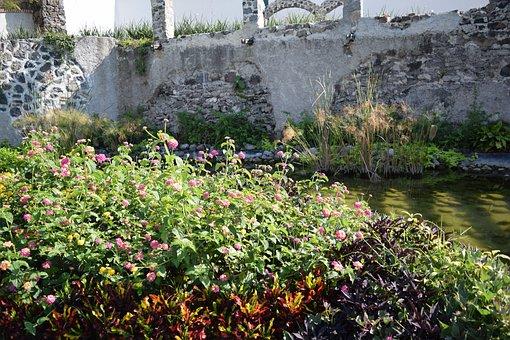 Nature, Water, Flowers, Creek, White Wall, Flower