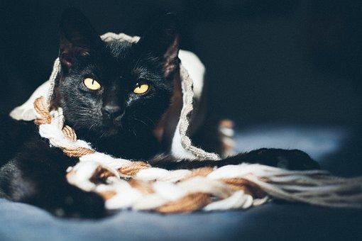 Cat, Feline, Animal, Kitten, Gata, Animals, Black Cat