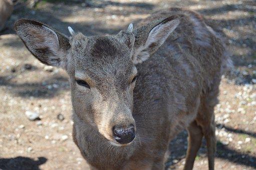 Animal, Forest, Park, Nature, Natural, Happy, Deer