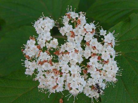 Woodland, Flowers, Flora, Plant, Wild, Nature, Summer