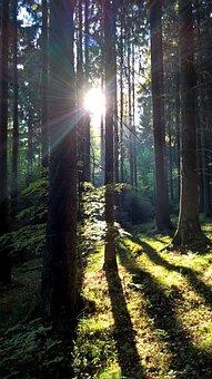 Morning Sun, Forest, Moss, Nature, Sun, Fog, Sunrise