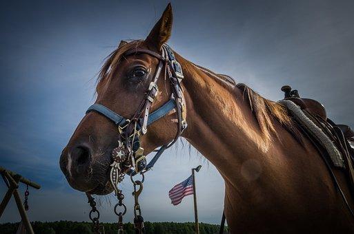 Horse, Pferdeportrait, Horse Head, Animal, Nature