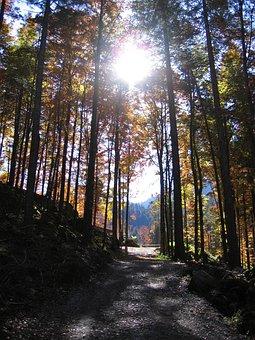 Autumn, Forest, Fall Color, Leaves, Fall Foliage