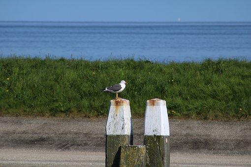 Seagull, Port, Bird, Sea, Water Bird