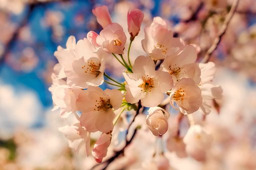 Flowers, Plants, Blooms, Blossoms, Tree, Spring, Summer
