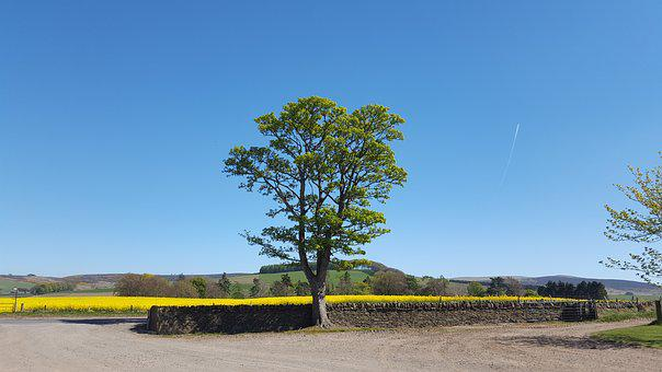 Landscape, Tree, Nature, Summer, Countryside, Sky, Blue