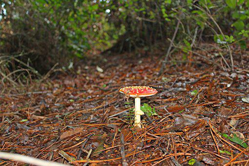 Mushroom, Forest, Nature, Autumn, Wild, Season, Natural