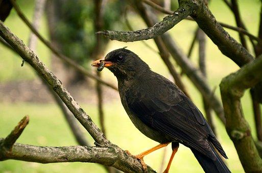 Ave, Bird, Bird Eating, Nature