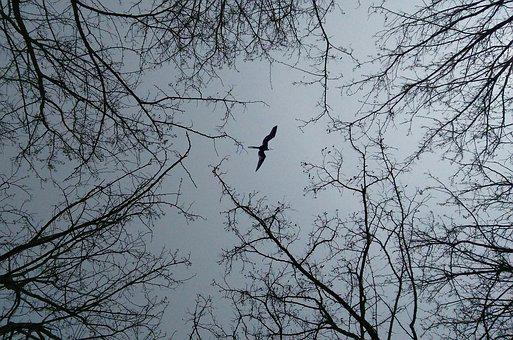 Branch, Look Up, Birds