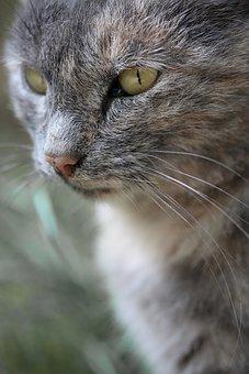 Cat, Animal, Kitten, Cute, Pets, Animal Portrait, Sweet