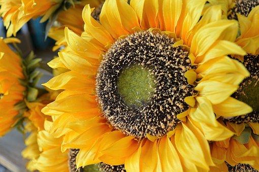 Flower, Sun Flower, Plant, Plastic, Summer