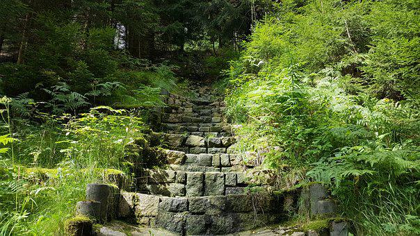 Stairs, Stone Stairway, Hiking, Gradually, Rise, Forest