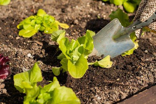 Salad, Bio, Green, Healthy, Frisch, Vitamins