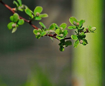 Green, Bush, Nature, Plant, Foliage, Branch, Green Leaf