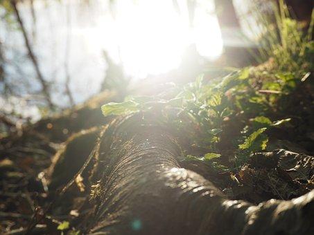 Finland, Finnish, Nature, Outdoor, Water, Moss, Green