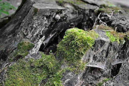 Stump, Moss, Forest