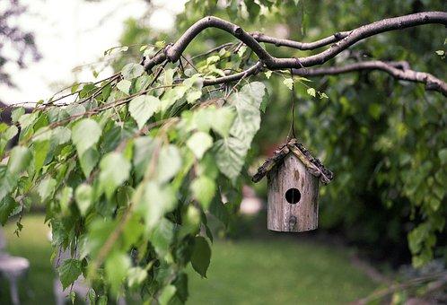 Bird Feeder, Tree, Wood, Rural, Feeder, Nature, Bird