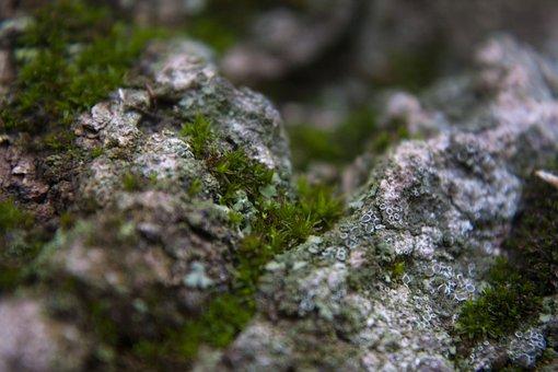 Moss, Lichen, Bark, Closeup, Nature, Forest