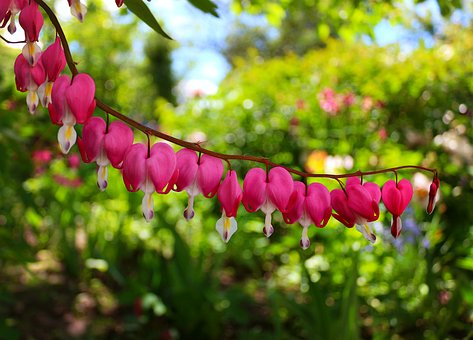 Flowers, Green, Heart, Pink, Nature, Plant