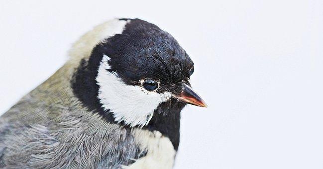 Bird, Stuffed, Animal, Taxidermy, Bird Preparation