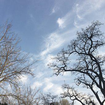 Sky, Branch, White Cloud, Blue Sky