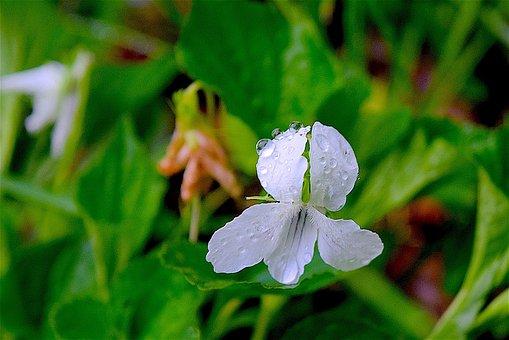 Flower, White, Green, White Flower, Floral, Nature