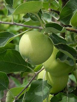 Apple, Green Apple, Branch With Leaves, Fruit