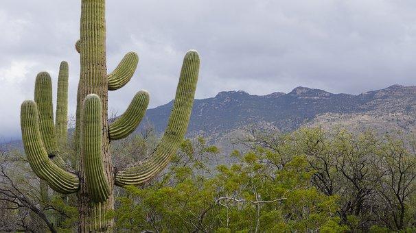 Cactus, Foe So Cute, Tucson, Cactus Garden, Nature