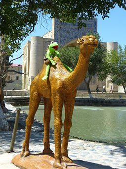 Camel, Fig, Pond, Water Storage, Labi Hauz, Bukhara