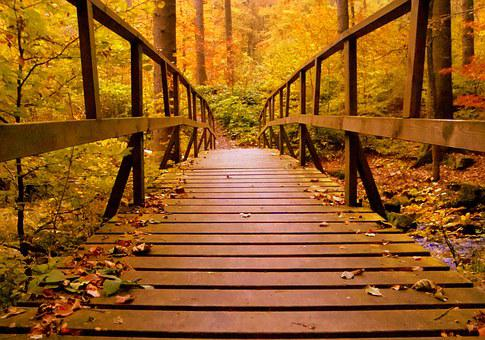 Forest, Bridge, Autumn, Web, Boardwalk, Nature, Leaves