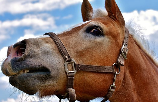 Horse, View, Funny, Perspective, Animal
