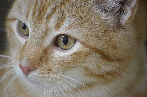Cat, Animal Welfare, Portrait