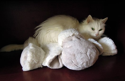 White Cat, Cat, Soft Toy, Sheep, Pet, Animals, Cats
