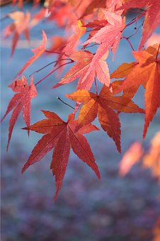 Autumn, Leaves, Orange, Frost, Fall, Nature, Red