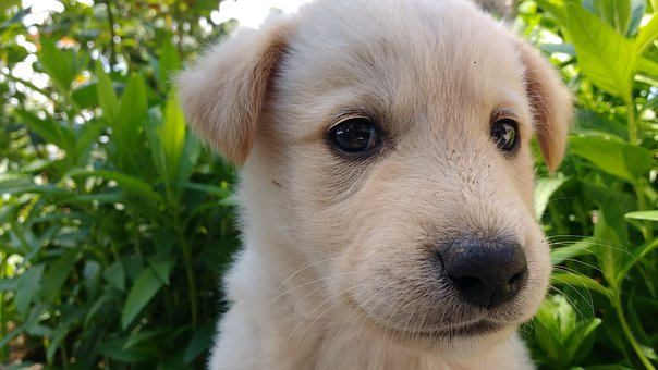 Cute Puppy, Puppy, Small Dog, Pet, Animal, Dog, Cute