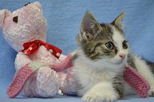 Animal Welfare, Kitten, Cat