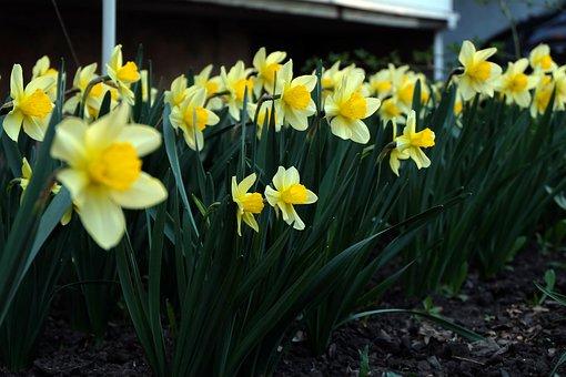 Flowers, Yellow, Garden, Flower, Beautiful Flowers