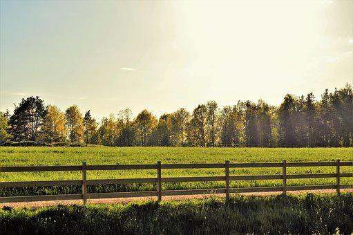 Fence, Go, Bed, Forest, Tree, Outdoor, Landscapes