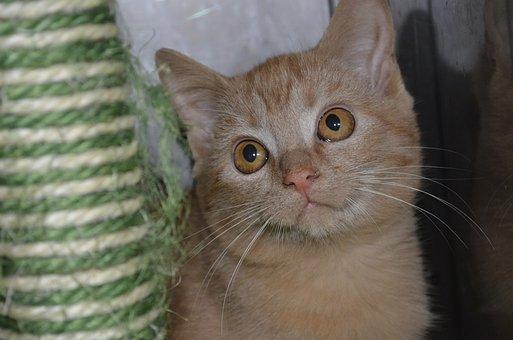 Animal Welfare, Kitten, Cat, Red Cat