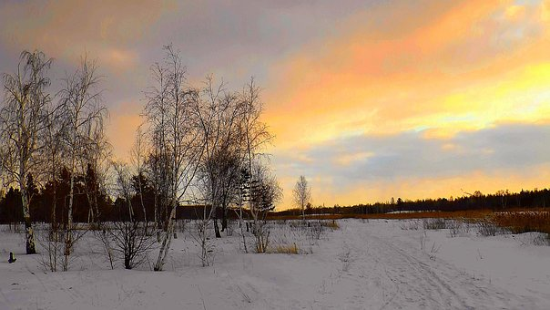 Nature, March, Living Nature, Colorful, Winter