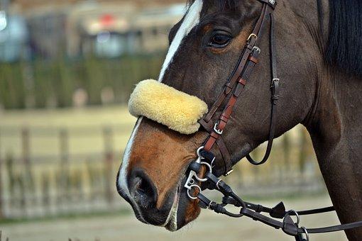 Horse, Horse Riding, Mount, Train, Nature, Horseshoe
