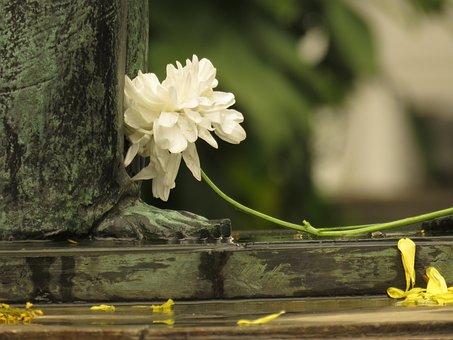 Art, Sculpture, Flower, Monument, Angel, Bust, Culture